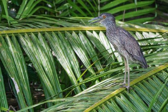 Oiseau sur les rives du Rio Sierpe