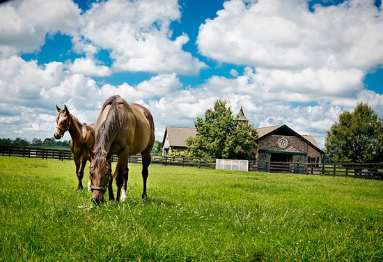 Versailles, KY: Broodmares at WinStar Farm