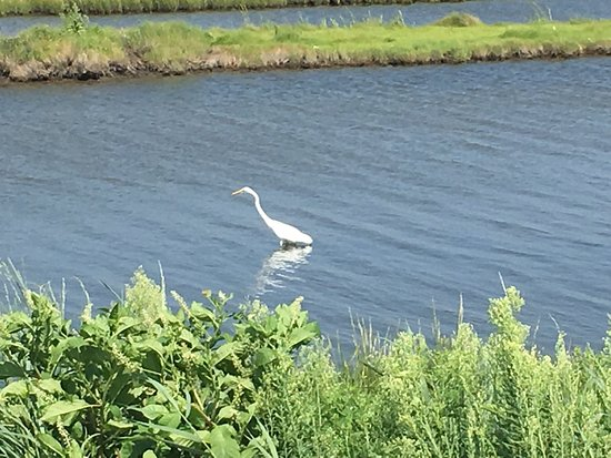 Oceanville, NJ: photo1.jpg
