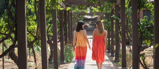 Rancho La Puerta Spa: Grape Vines