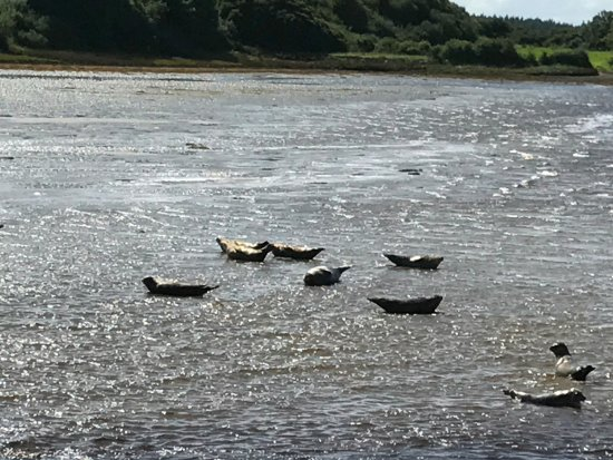 Donegal Town, Ireland: Seals loving the sun