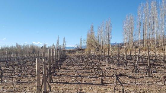 Bodega Entre Tapias: Viñedos entre tapias