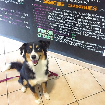 Java 654 Coffee Shop : we're pet friendly too!