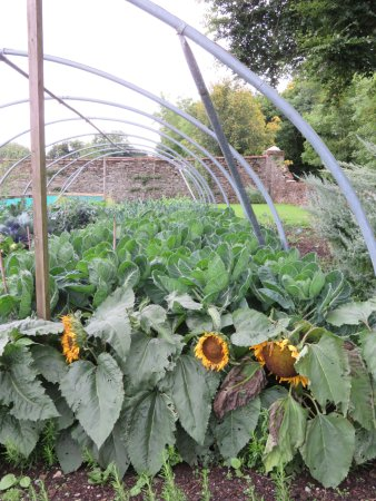 Beech Hill Country House Hotel: So, they grow their own vegetables and fruit. The cabbage was fantastic.