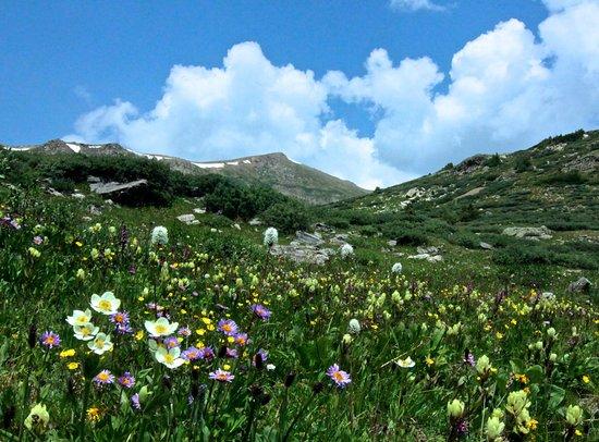 Linkins Lake Trail: Wildflower Meadow below Linkins Lake