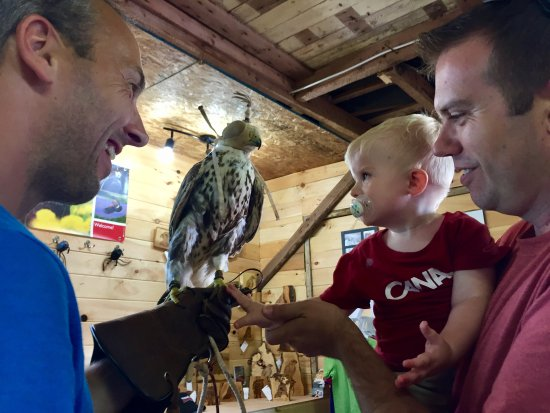 Stratford, Canada: Even our toddler got to touch a falcon