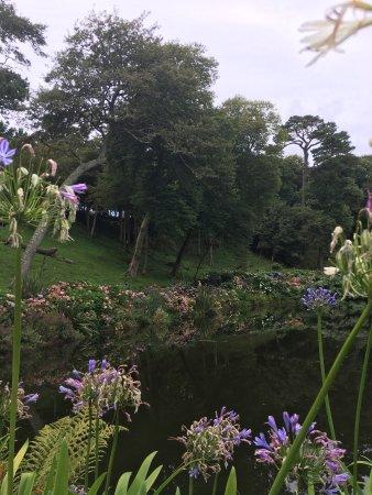Trebah Garden: photo2.jpg