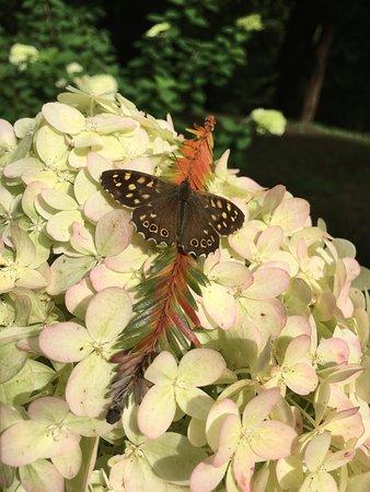 Trebah Garden: photo3.jpg
