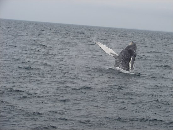 Barnstable, MA : Whale watching