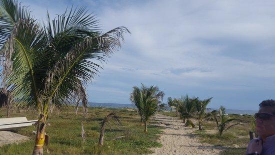 Mazunte, Mexico: Ver Arribar a las Tortugas es extraordinario¡¡¡¡¡¡