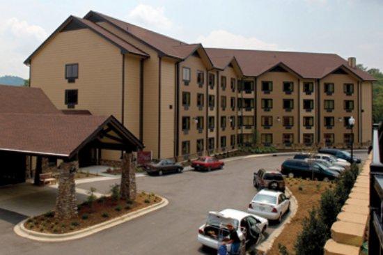 Ridgecrest, Carolina del Norte: Mountain Laurel