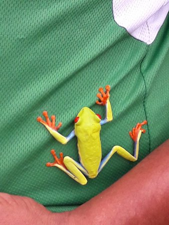 Vapues Nicaragua Tours: Relaxing with a Tree Frog