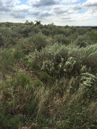 Oklahoma: recent rains made all the native grasses so green