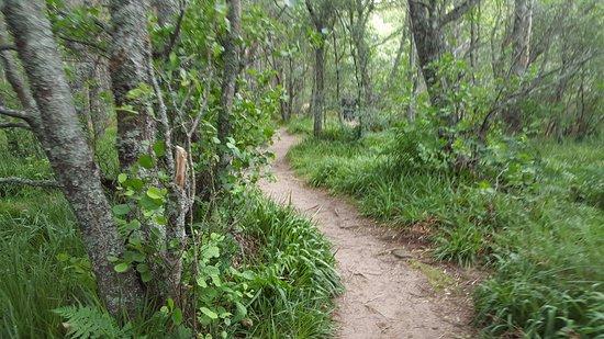 Aviemore, UK: Nice Tracks for tracking