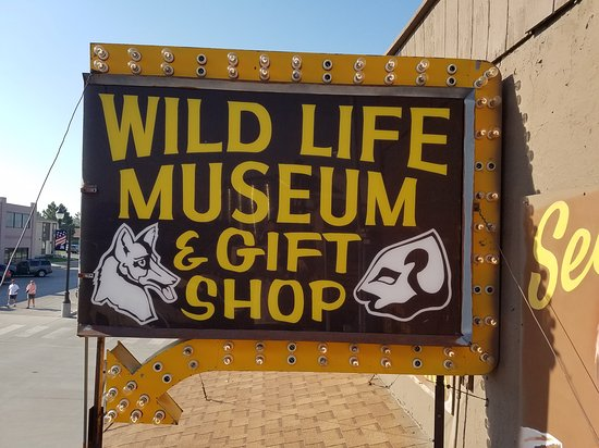 Wildlife Museum & Gift Shop 사진