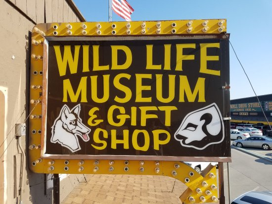 Wall, SD: Wildlife Museum & Gift Shop