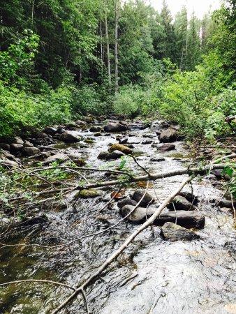 Fish creek campground reviews glacier national park for Fish creek lodging