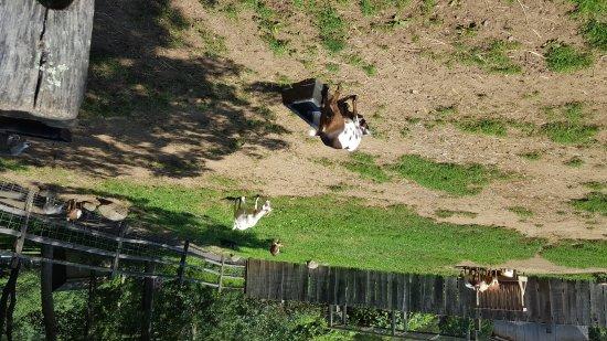 Stamford Museum & Nature Center: Animals at farm