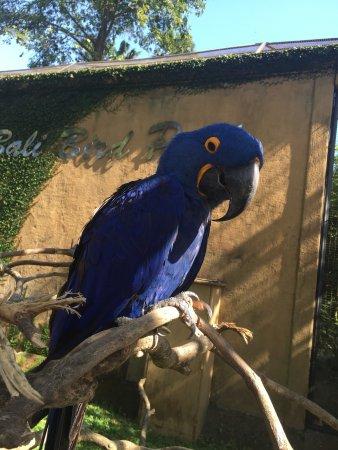 Bali Bird Park : photo0.jpg