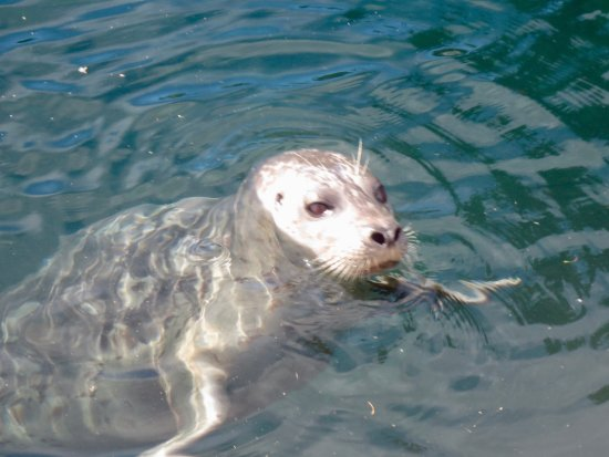 Smokin Tuna: A friendly seal.