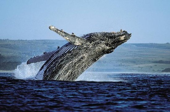 Samana Bus Whale Watching Tour