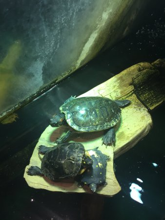 Maryland: turtles- I believe there were 4 total