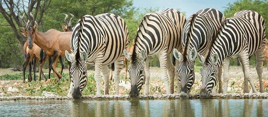 Watoto Wa Bingwa Safaris & Tours