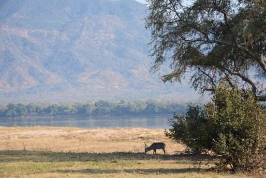 Camping Sites at Mana Pools National Park: Waterbuck on the Zambezi flood plains