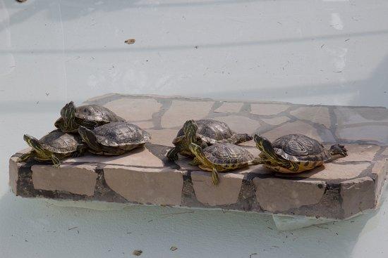 Bild von sol umag umag tripadvisor for Piscina tartarughe