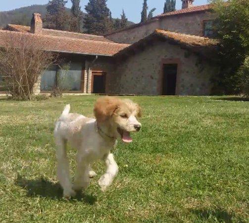 La Casella, Eco Resort: qui la mia cagnolina felice di essere accolta qui a la casella