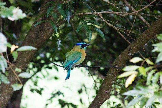 Cabanas La Pradera: Heel veel vogels!