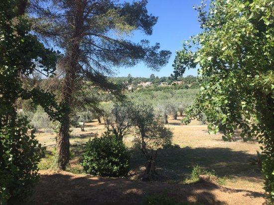 Club Med Opio Provence: Les alentours de la piscine ZEN près de l'Oliveraie