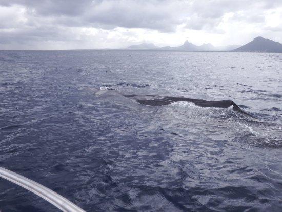 Grande Riviere Noire: Sperm whale