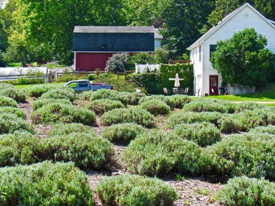 Niles, Μίσιγκαν: A farm for years, Martha Wilcznski bought it in 2001