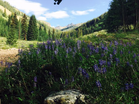 Wetterhorn and Uncompahgre Peaks: Lots of wild flowers on this hike, Matterhorn in the background