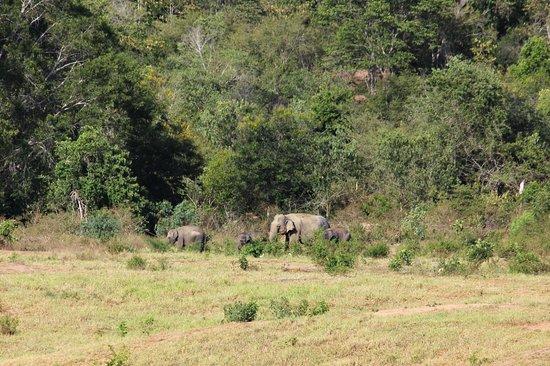 Province de Prachuap Khiri Khan, Thaïlande : We found them!