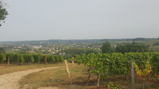 Loupiac, France: 20170824_102718_large.jpg