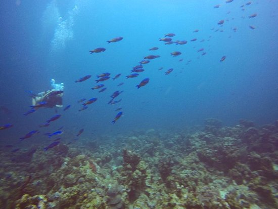 St. Croix Ultimate  Bluewater Adventures (SCUBA), Inc.: Diving with a school of fish
