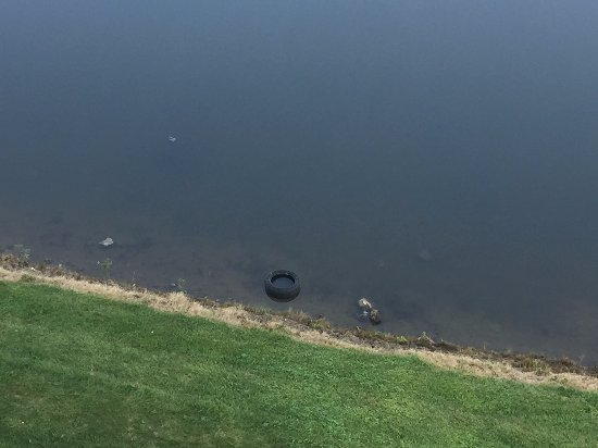 Embassy Suites by Hilton Indianapolis - North: Tire in pond