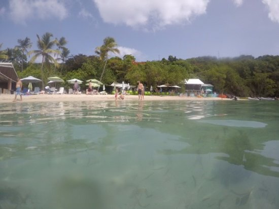 Water Island, St. Thomas: Looking at dinghys from the floating bar
