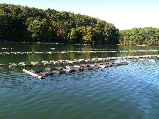 Oyster farm on the Damariscotta River