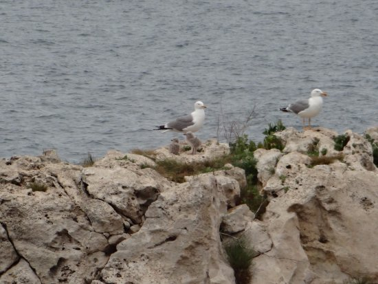 Seagulls' nest - Picture of Tyulenovo Rocks, Tyulenovo