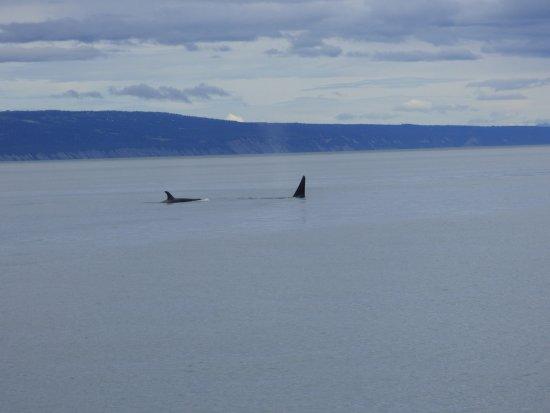 Rainbow Tours: Orcas