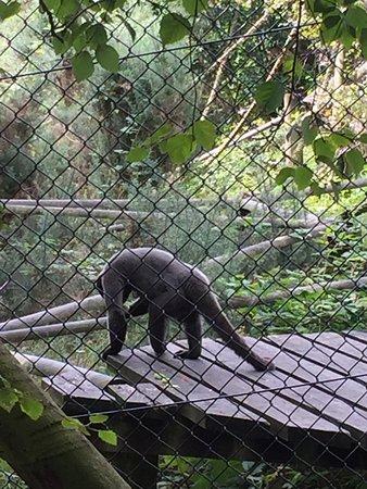 Monkey World: photo3.jpg
