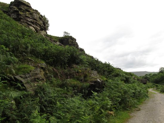 Jerry and Bens Cottages: walk to the moors