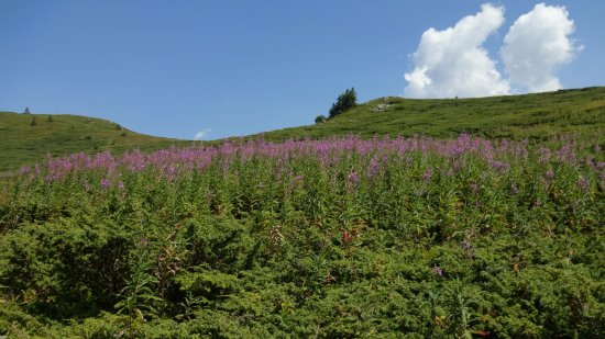 Montana, Bulgaria: Wild flowers