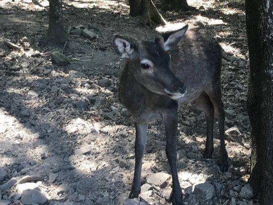 San Priamo, Italia: Parco dei cervi, Maidopis #escursionidolcelunasardegna
