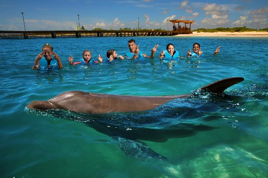 Delphinus Conservation Sanctuaries