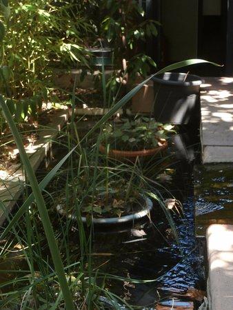 Côté Jardin : Un petit bassin pour une note de fraîcheur