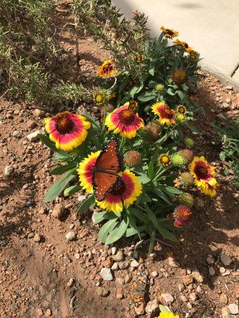 Ordinaire Desert Botanical Garden: Butterfly Garden